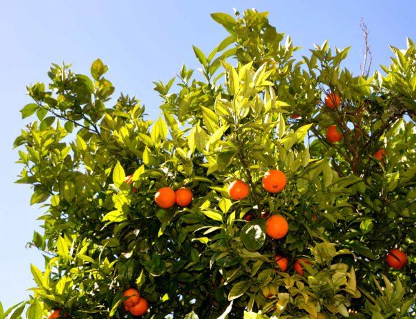 varie_arance